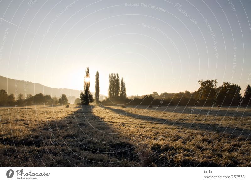 Morgensonne Natur Landschaft Wolkenloser Himmel Sonnenaufgang Sonnenuntergang Sonnenlicht Herbst Schönes Wetter Baum Sträucher Wiese Feld Stimmung ruhig Luft