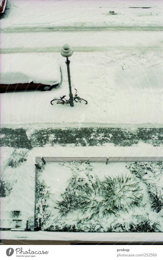 Neukölln zugeschneit weiß Pflanze Winter Umwelt Straße Schnee Wege & Pfade PKW frisch gefährlich bedrohlich Idylle unten Bürgersteig Straßenbeleuchtung