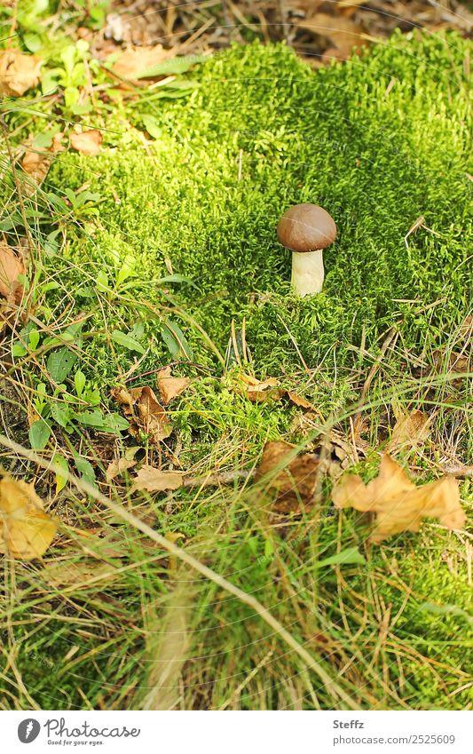 Wie Pilz im Moos Pilzhut Waldboden Herbstwald Herbstlaub Gras goldener Oktober Herbstgefühle Waldstimmung natürlich Fundstück braun grün herbstlich
