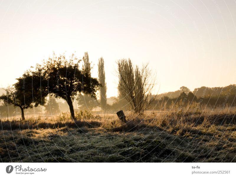 Morgensonne 2 Natur Baum Sonne kalt Wiese Herbst Umwelt Landschaft Gras gold Schönes Wetter Wolkenloser Himmel