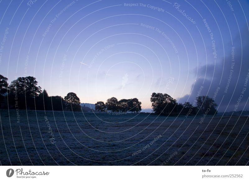 Bevor die Sonne aufgeht Himmel Natur blau Baum kalt Herbst Umwelt Landschaft Gras Feld Sträucher Schönes Wetter