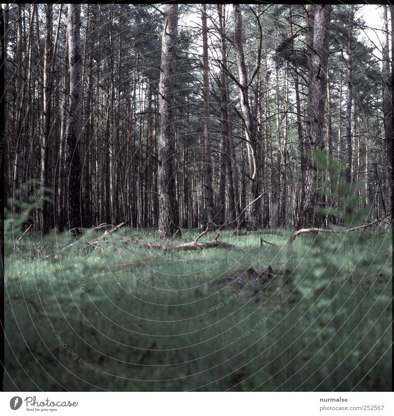 wo ist Rotkäppchen ? Natur Baum Pflanze Tier Einsamkeit Wald Wetter Freizeit & Hobby wild natürlich wandern stehen Vergänglichkeit Baumstamm stagnierend