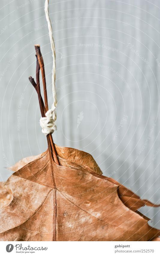 der Herbst lässt seine Blätter fallen Umwelt Natur Pflanze Blatt hängen dehydrieren trocken blau braun Zufriedenheit Geborgenheit Stress Endzeitstimmung