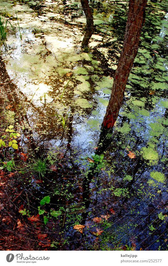der biber wars Umwelt Natur Landschaft Pflanze Tier Wasser Sommer Herbst Klima Klimawandel Wetter Baum Moos Wald Urwald Seeufer Bucht Teich bibersee Baumstamm