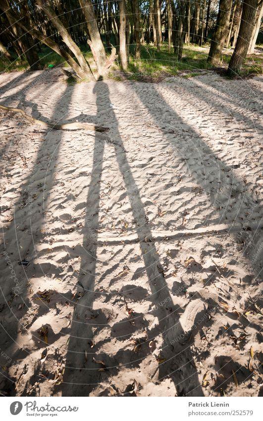 Tallest Man on Earth Natur schön Pflanze Sommer Strand Wald Umwelt Landschaft Sand Küste Wetter Erde stehen Urelemente