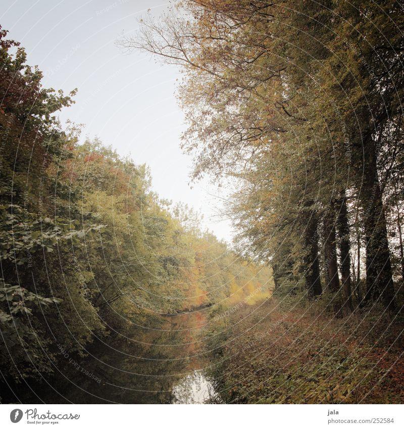 herbst Umwelt Natur Landschaft Pflanze Himmel Herbst Baum Sträucher Grünpflanze Wildpflanze Bach natürlich blau braun gelb grün Farbfoto Außenaufnahme