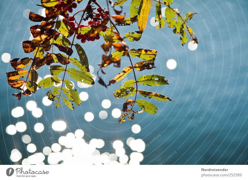Ganz mein Herbst Natur Wasser blau Pflanze ruhig Farbe Herbst See glänzend Wandel & Veränderung Urelemente Vergänglichkeit Seeufer Beeren Herbstlaub Sinnesorgane