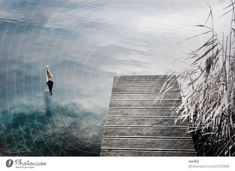 Vor dem Absprung Freizeit & Hobby Umwelt Natur Wasser Herbst Schönes Wetter Röhricht Teich See ruhig Idylle Steg Fahne Farbfoto Gedeckte Farben Außenaufnahme