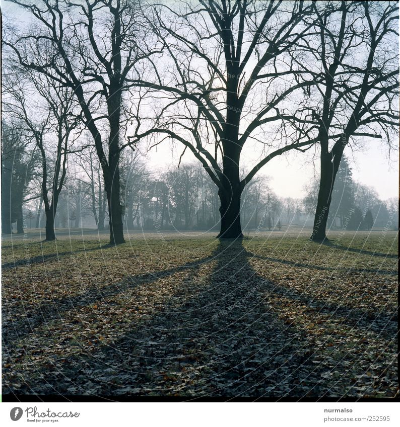 Herbst. Natur grün Baum Pflanze Tier Erholung Umwelt Landschaft Gras Traurigkeit träumen Stimmung Park Kunst braun