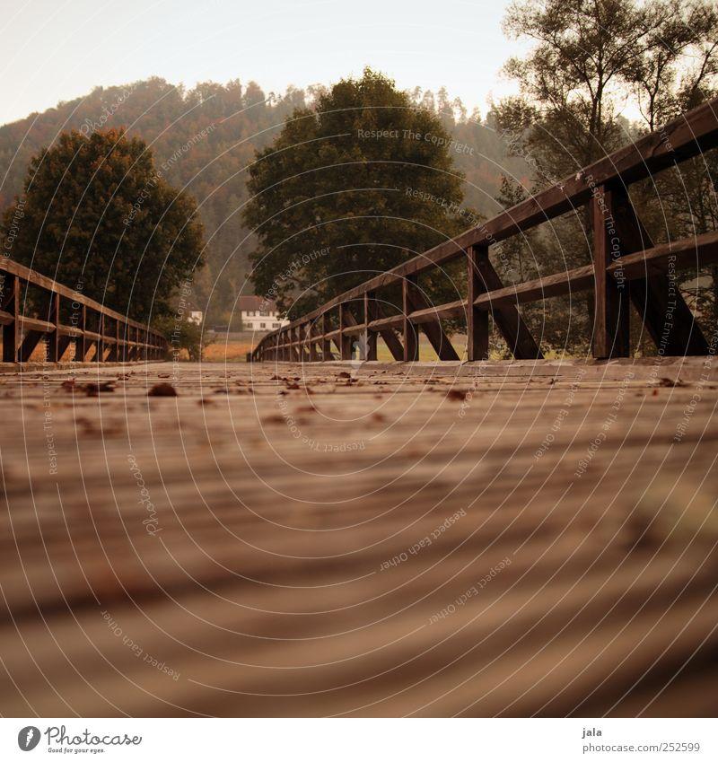 CHAMANSÜLZ | an der brücke Natur alt grün Baum Pflanze Herbst Umwelt braun natürlich Brücke