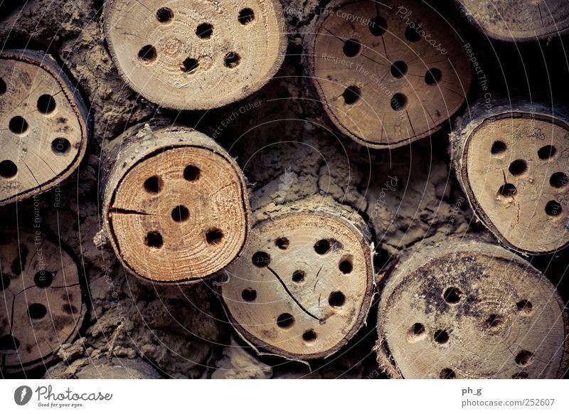 Natur Baum Sommer Holz braun Totholz