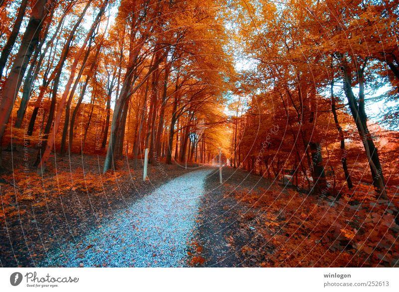 herbstfarben Natur Baum rot Pflanze Blatt Einsamkeit Wald Ferne Erholung Herbst Landschaft Holz Wege & Pfade Erde Park Zeit