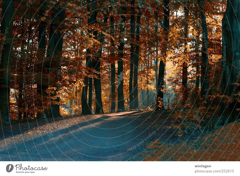 licht im dunkeln Natur Blick Landschaft Wuppertal Pflanze Sonne Sonnenlicht Sonnenaufgang Sonnenuntergang Sonnenstrahlen Herbst Baum Blatt Herbstlaub Wald