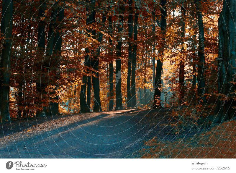 licht im dunkeln Natur schön Baum Pflanze rot Sonne Blatt Wald Herbst Landschaft Wege & Pfade Park orange Deutschland Fotografie Hügel