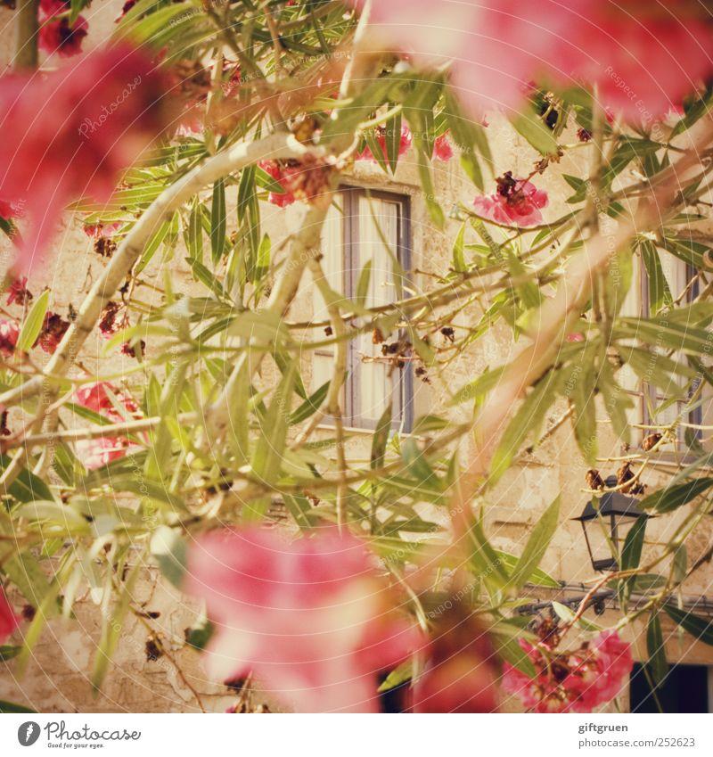 stalker's perspective Baum Pflanze rot Sommer Blatt Haus Fenster Blüte Frühling Fassade Sträucher beobachten Dorf Laterne verstecken Straßenbeleuchtung