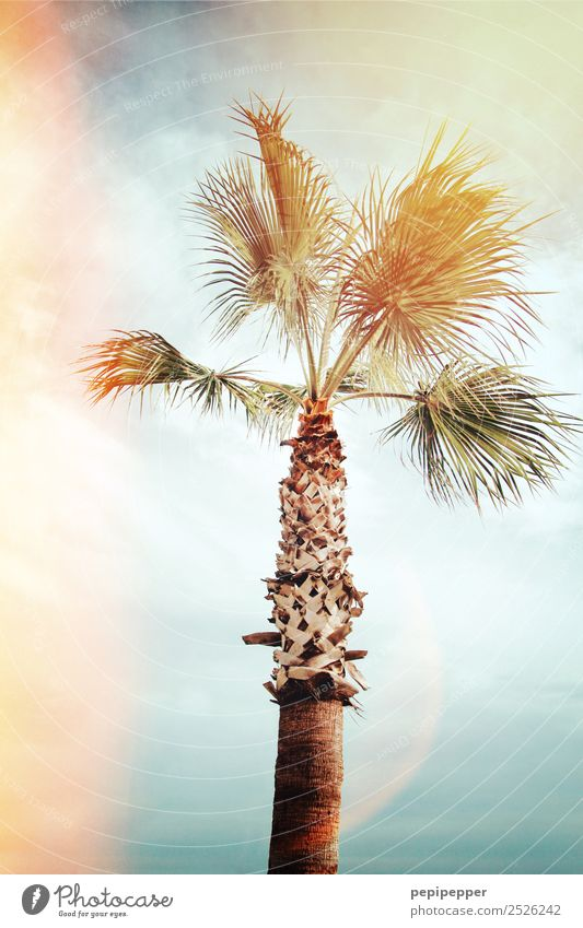 Palme Ferien & Urlaub & Reisen Tourismus Ausflug Abenteuer Ferne Sommer Strand Meer Natur Pflanze Himmel Wolken Wind Baum Küste Holz Bewegung exotisch türkis