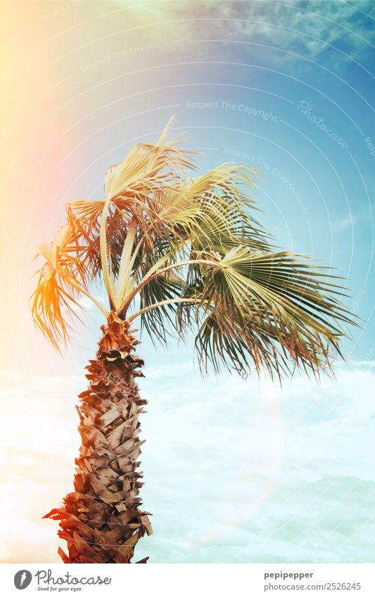 Palme Ferien & Urlaub & Reisen Tourismus Ausflug Sommer Sommerurlaub Umwelt Natur Pflanze Himmel Sonne Sonnenaufgang Sonnenuntergang Schönes Wetter Baum Küste