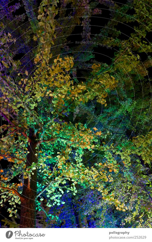 Photosynthese Natur blau grün Baum Pflanze Blatt Herbst Berlin Landschaft Park Beleuchtung leuchten Ast Blühend Baumstamm Lightshow