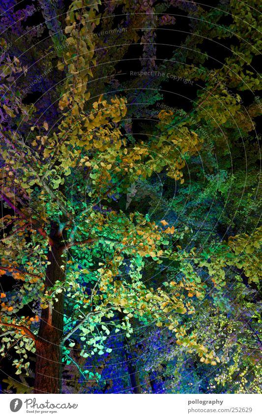 Photosynthese Natur Landschaft Herbst Pflanze Baum Blatt Park Berlin Blühend Blätterdach mehrfarbig grün blau leuchten leuchtend grün leuchtende Farben