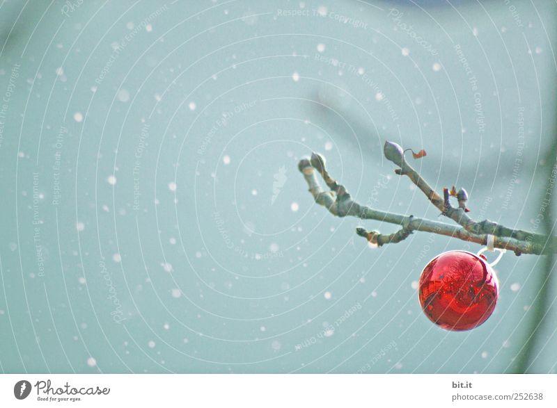 gegen den Sturm... Feste & Feiern Himmel Winter Wetter Schnee Schneefall Baum Glas hängen blau rot Stimmung ruhig Einsamkeit Tradition Weihnachten & Advent