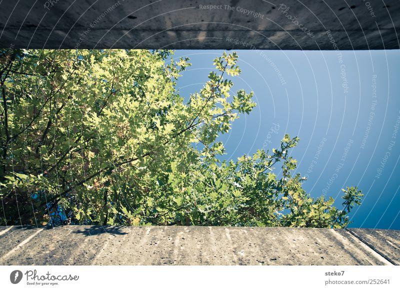 herbst in 16:9 Pflanze Herbst Schönes Wetter Baum Mauer Wand blau grau grün begrenzen Farbfoto Außenaufnahme Froschperspektive