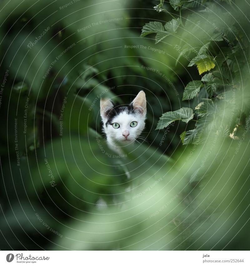 ^°°^ Natur Katze schön Pflanze Blatt Tier Umwelt Haustier Grünpflanze