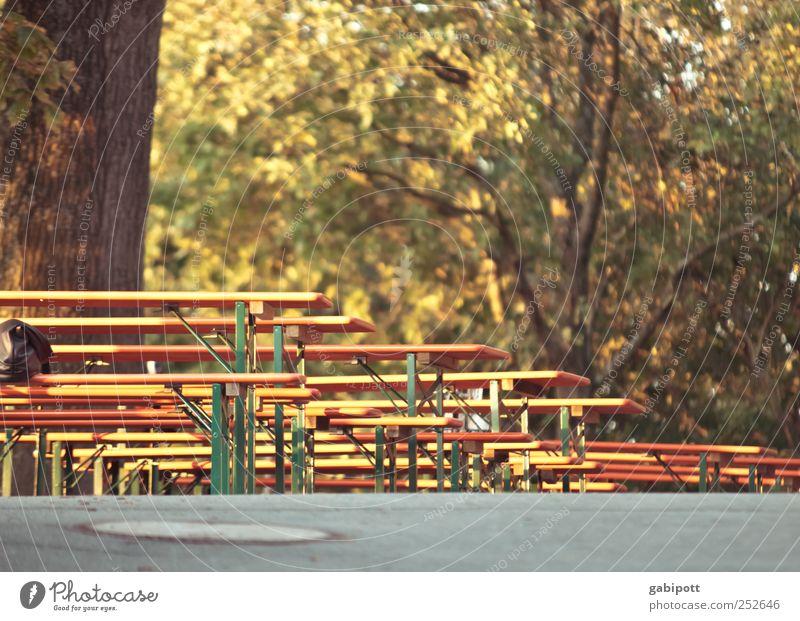 noch Plätze frei Stuhl Tisch ausgehen Veranstaltung braun Idylle Pause Perspektive Holzbank Holztisch Sitzgelegenheit Ausflugsziel Gartenmöbel Lokal Herbst Baum