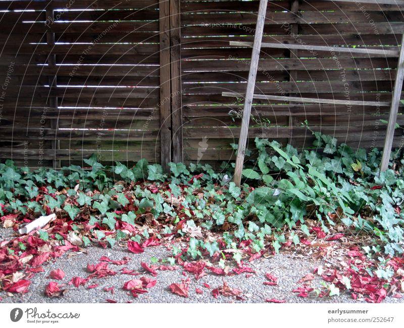Herbstanfang Natur grün Pflanze rot Sommer Blatt Tier kalt Herbst Holz Garten grau braun Zeit Beginn Streifen