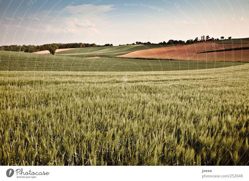 … hier darf ich's sein. Landwirtschaft Forstwirtschaft Natur Landschaft Himmel Wolken Sommer Schönes Wetter Nutzpflanze Feld groß blau braun grün ruhig Horizont