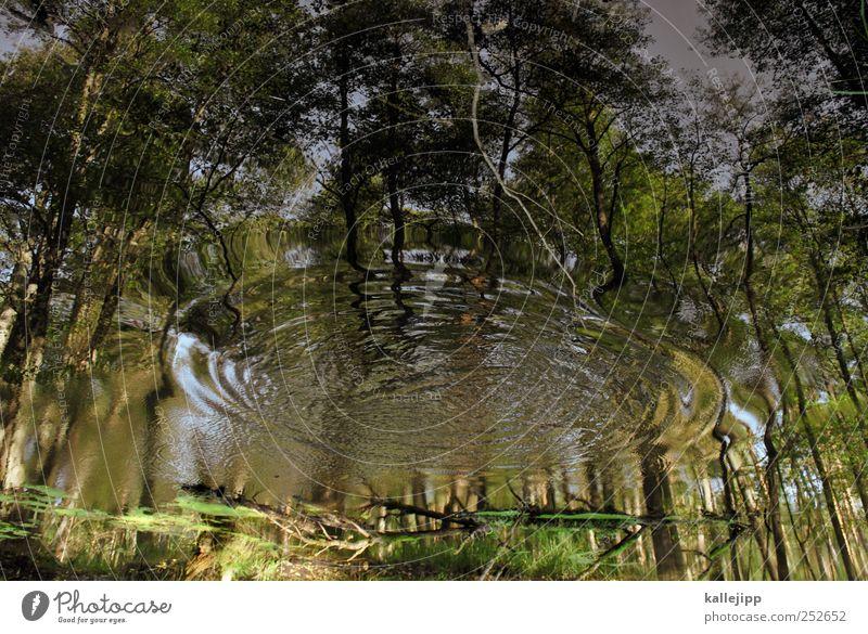 grüne welle Umwelt Natur Landschaft Pflanze Tier Wasser Sommer Baum Moos Wald Moor Sumpf Teich See Bewegung Kreis Wellen ausbreiten Tsunami senden Marketing