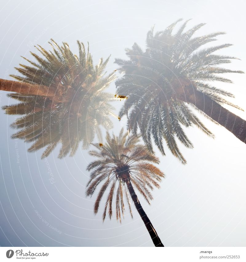 Palm Beach Sommer Ferien & Urlaub & Reisen Freude Blatt Ferne Erholung Freiheit Stil Perspektive Lifestyle Palme Doppelbelichtung exotisch Fernweh Sommerurlaub