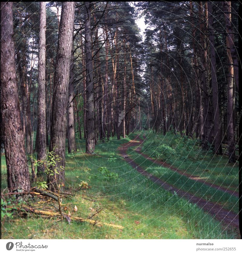 Rotkäppchens Weg Natur grün Baum Pflanze Wald Erholung Wege & Pfade braun natürlich Fußweg Verkehrswege Nadelwald Erholungsgebiet Fichtenwald