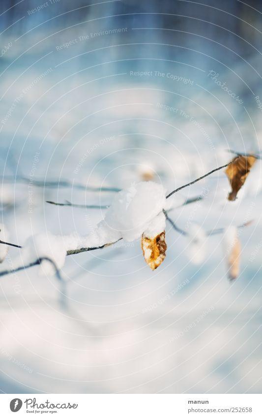 kalt Natur Winter Eis Frost Schnee Blatt Zweige u. Äste authentisch hell natürlich blau weiß ruhig Farbfoto Außenaufnahme Menschenleer Textfreiraum oben