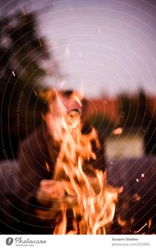 relight my Knüppelkuchen Abenteuer Camping Wolkenloser Himmel Baum Garten bedrohlich Feuer Lagerfeuerstimmung Feuerstelle knüppelkuchen Stockbrot Grillen