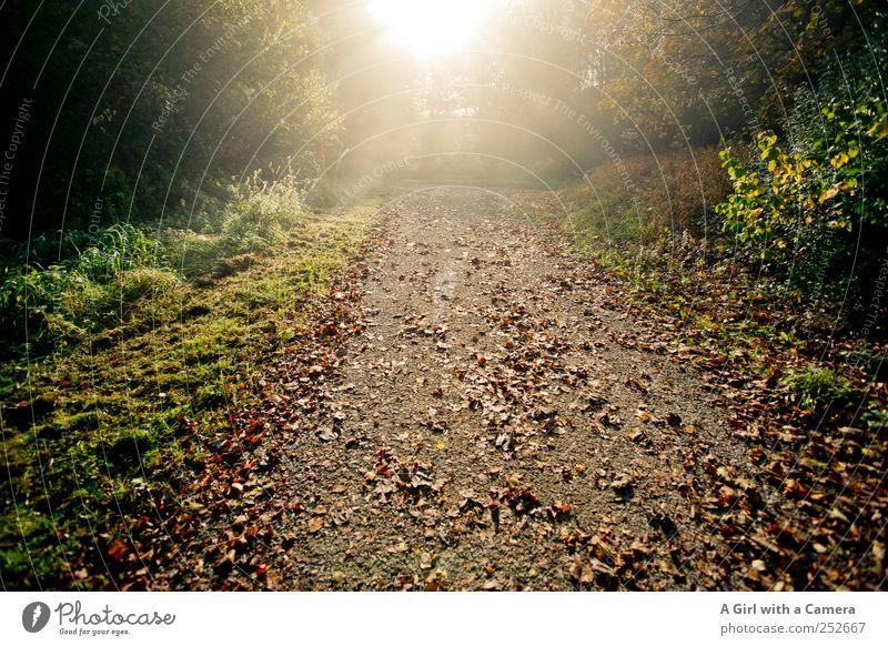 die unerträgliche Leichtigkeit des Herbstes Umwelt Natur Landschaft Pflanze Sonne Sonnenlicht Baum Gras Sträucher Blatt Wald leuchten Freundlichkeit frisch