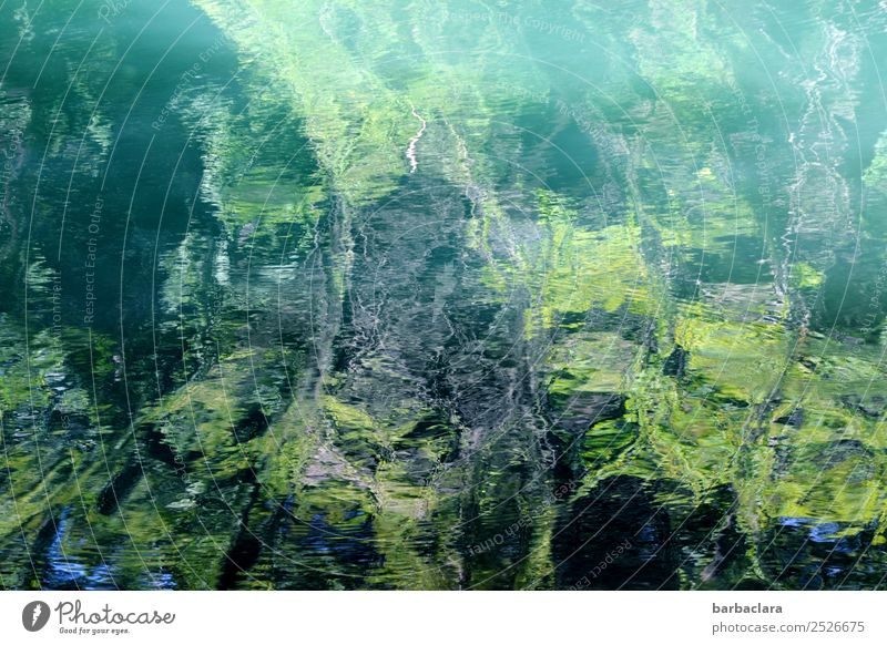 Überraschung | abstrakte Wasserlandschaft Natur Landschaft Pflanze Urelemente Grünpflanze Wald Bach Linie Wellen grün Farbe Kunst Sinnesorgane Umwelt Farbfoto