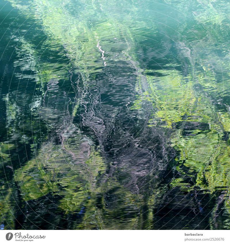 Nullachtfünfzehn | Wasserspiegelung Natur Urelemente Pflanze Wald Fluss Linie dunkel hell wild grün bizarr Kunst Umwelt Farbfoto Außenaufnahme Detailaufnahme