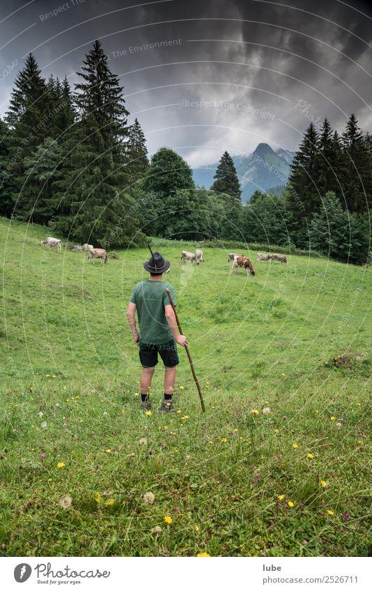 Almhirte Landwirtschaft Forstwirtschaft Umwelt Natur Landschaft Klimawandel schlechtes Wetter Alpen Berge u. Gebirge Tier Nutztier Kuh Herde Zusammensein
