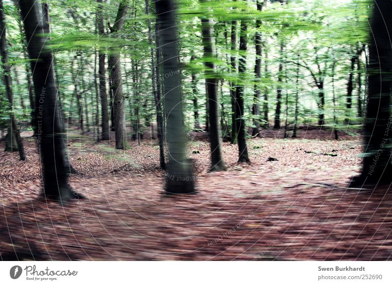 Die Eiche im Buchenwald Natur grün Baum Ferien & Urlaub & Reisen Pflanze Blatt ruhig Wald Umwelt Landschaft Herbst Holz wandern Tourismus Wachstum Sehnsucht