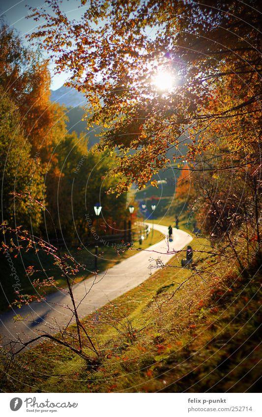 falling leaves Natur schön Blatt Wald Herbst Umwelt Berge u. Gebirge Gefühle Wege & Pfade Stimmung Park Kunst Zufriedenheit Warmherzigkeit Alpen Schönes Wetter
