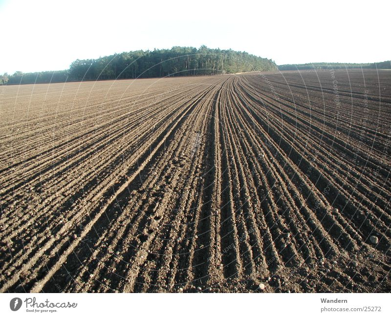 Acker Natur Herbst Feld Landwirtschaft Sachsen Ebene säen