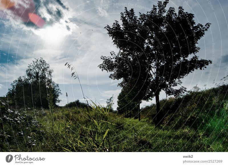 Verhüllt Umwelt Natur Landschaft Pflanze Luft Himmel Wolken Horizont Klima Schönes Wetter Baum Gras Sträucher Wiese leuchten Farbfoto Gedeckte Farben