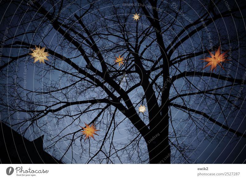 Sternenhimmel Wolkenloser Himmel Winter Baum hängen leuchten dunkel oben Weihnachten & Advent Herrnhuter Sterne Stern (Symbol) Zweige u. Äste festlich Farbfoto