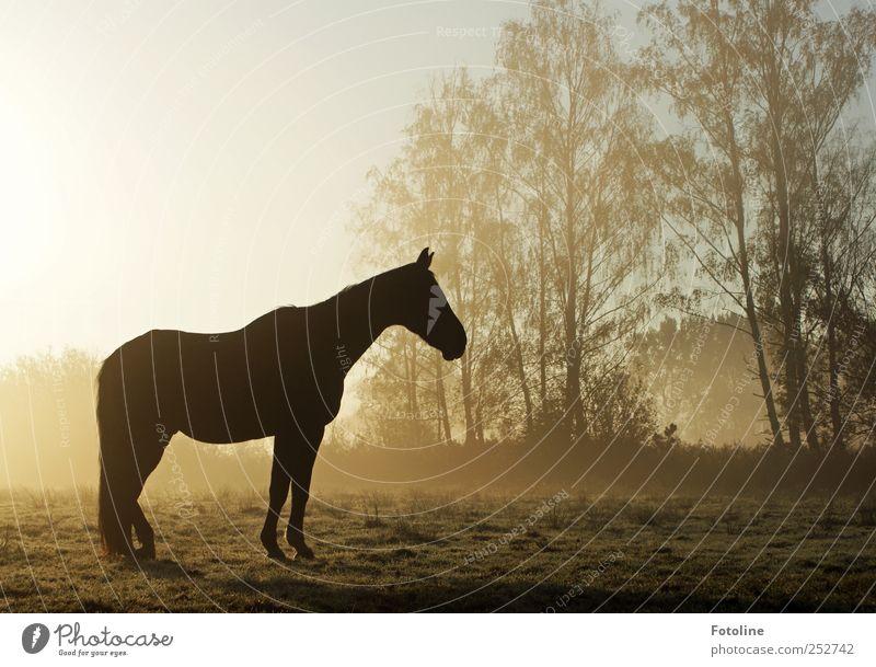 Nebelhüh! ;-) Himmel Natur Baum Pflanze Tier Wiese Umwelt Landschaft Gras hell Feld nass natürlich Pferd Fell