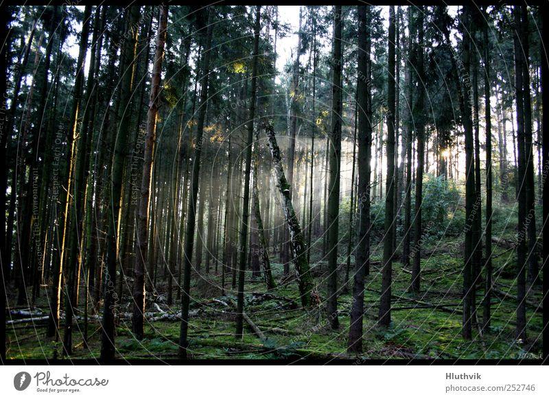 Ein starker Glanz Umwelt Natur Landschaft Pflanze Urelemente Sonne Sonnenaufgang Sonnenuntergang Sonnenlicht Herbst Nebel Nordlicht Baum Grünpflanze Wald Hügel