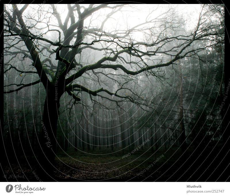 Aus dem Dunkel Natur weiß grün Baum Pflanze schwarz Wald kalt dunkel Herbst Umwelt Landschaft braun Nebel frisch frei
