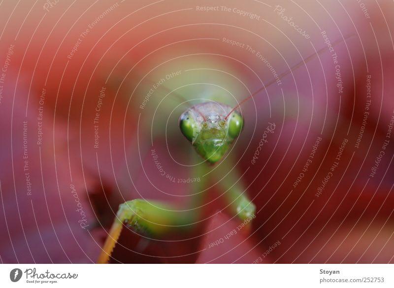 Die Gottesanbeterin Expedition Sonne Umwelt Natur Pflanze Tier Urelemente Sonnenlicht Klima Schönes Wetter Baum Blume Gras Sträucher Moos Blatt Grünpflanze