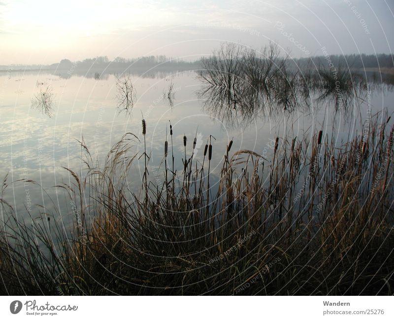 Teichlandschaft Wasser