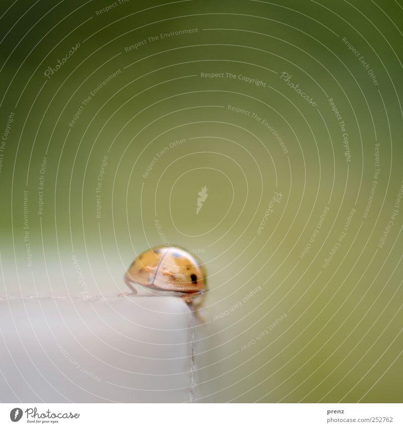 auf wiedersehen Tier Wildtier Käfer 1 Linie krabbeln grau grün rot Marienkäfer Insekt Ecke Stein Abschied Farbfoto Außenaufnahme Menschenleer Textfreiraum oben