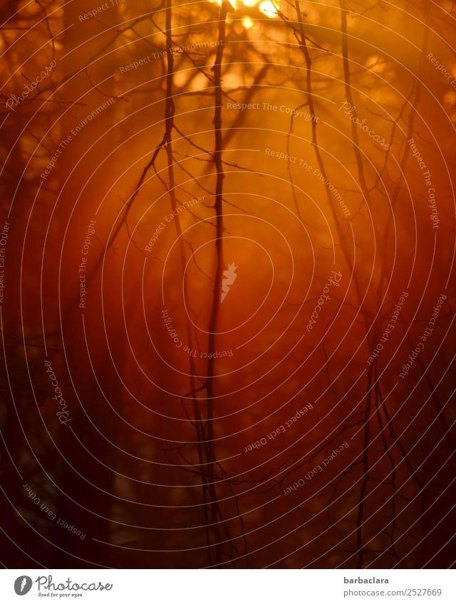 heiße Luft | Abendsonne Natur Sonne Schönes Wetter Baum Sträucher Wald leuchten Wärme rot Gefühle Stimmung Ende Energie erleben Frieden Klima Kraft Sinnesorgane